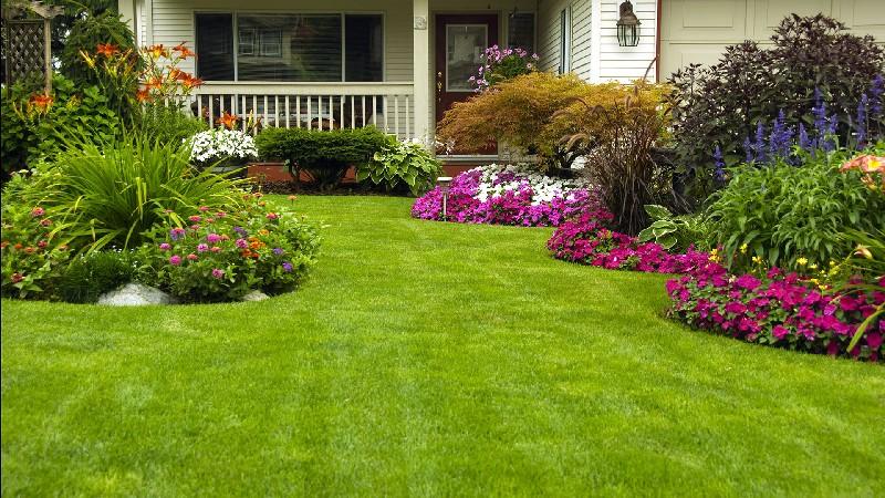 Piękny trawnik