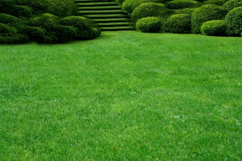 Piękna trawa 2